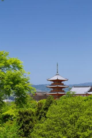 新緑の清水寺三重塔
