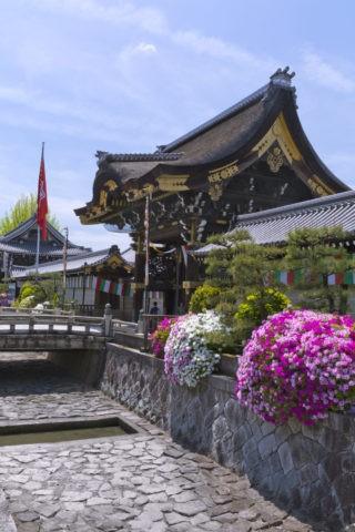 本願寺とツツジ