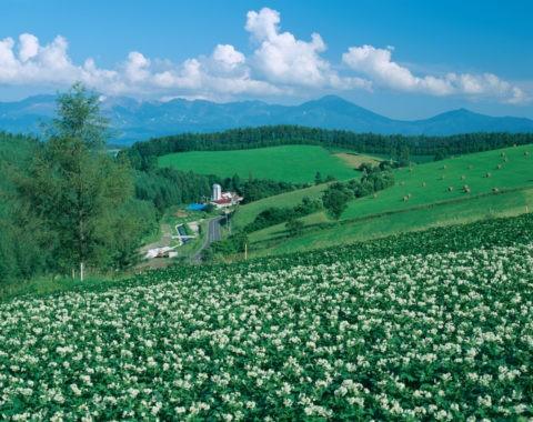 ジャガイモ畑と牧草地