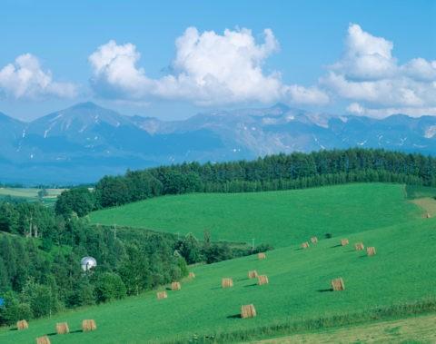 牧草地と十勝岳連峰