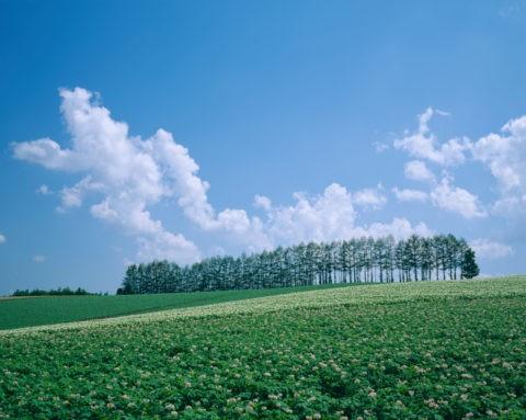 針葉樹林とジャガイモ畑
