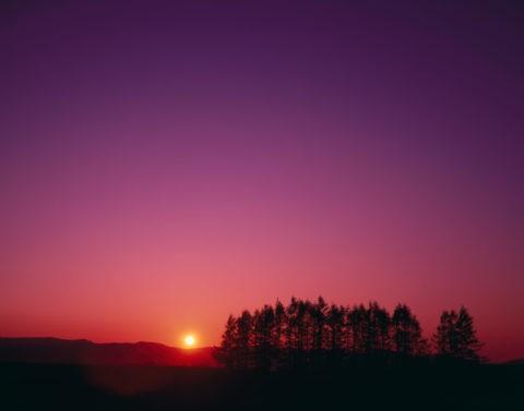 夕日と針葉樹林