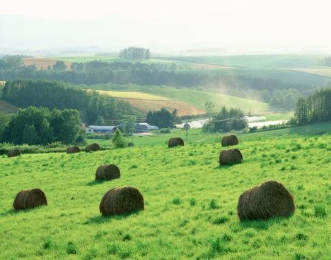 逆光の牧草地