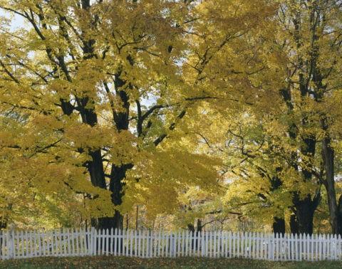 黄葉と柵 バーモント