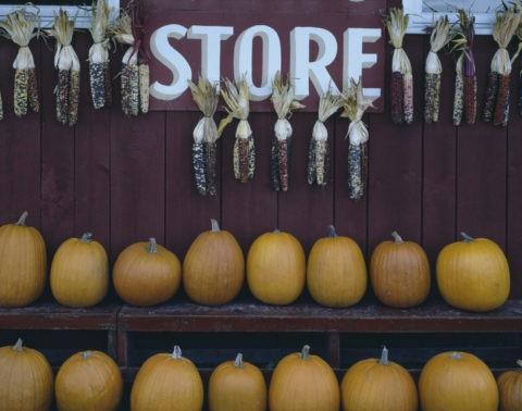 とうもろこしとかぼちゃ バーモント