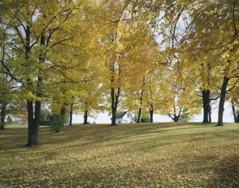黄葉の中の白い家 バーモント