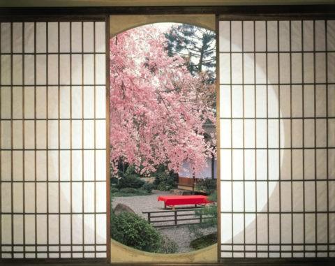丸窓と桜 C.G.合成