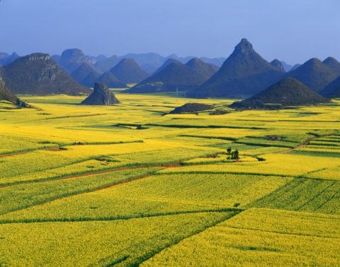 羅平 菜の花畑と山並み