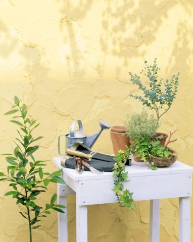 白いテーブルとグリーン