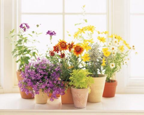 窓辺に置いた花の鉢植