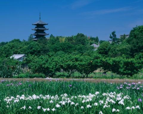 菖蒲と備中国分寺