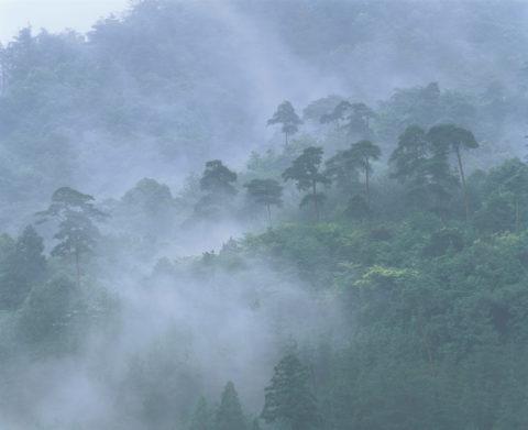 煙雨と松林 東山