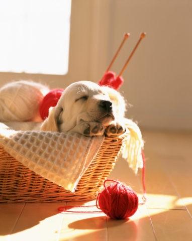かごの中で寝ているラプラドル犬