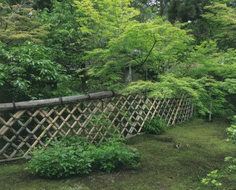 新緑の光悦垣