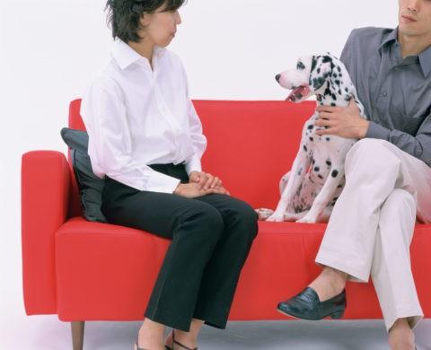 ソファーに座る人と犬