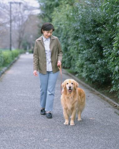 犬と散歩をする女性