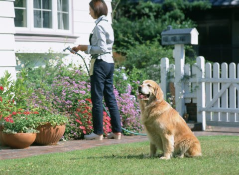 花に水をやる人と犬