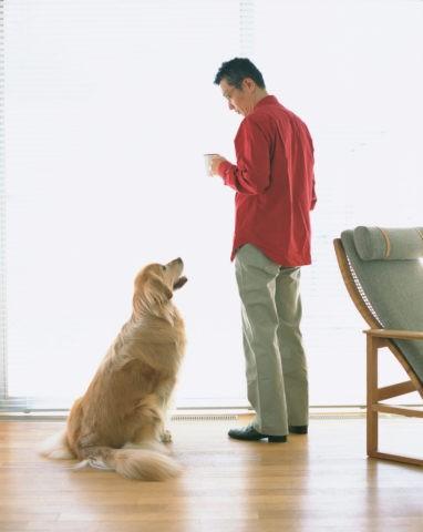 リビングの男性と犬