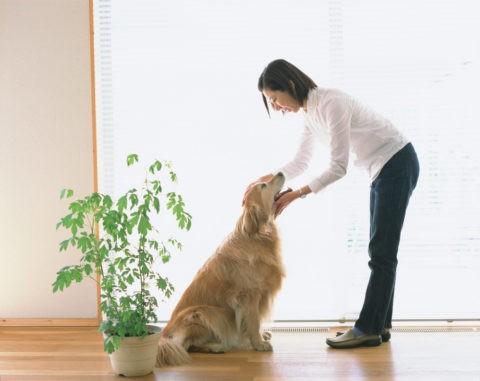 リビングの女性と犬