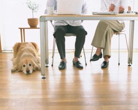 デスクと夫婦と犬