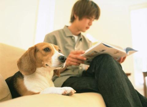 リビングの犬と男性