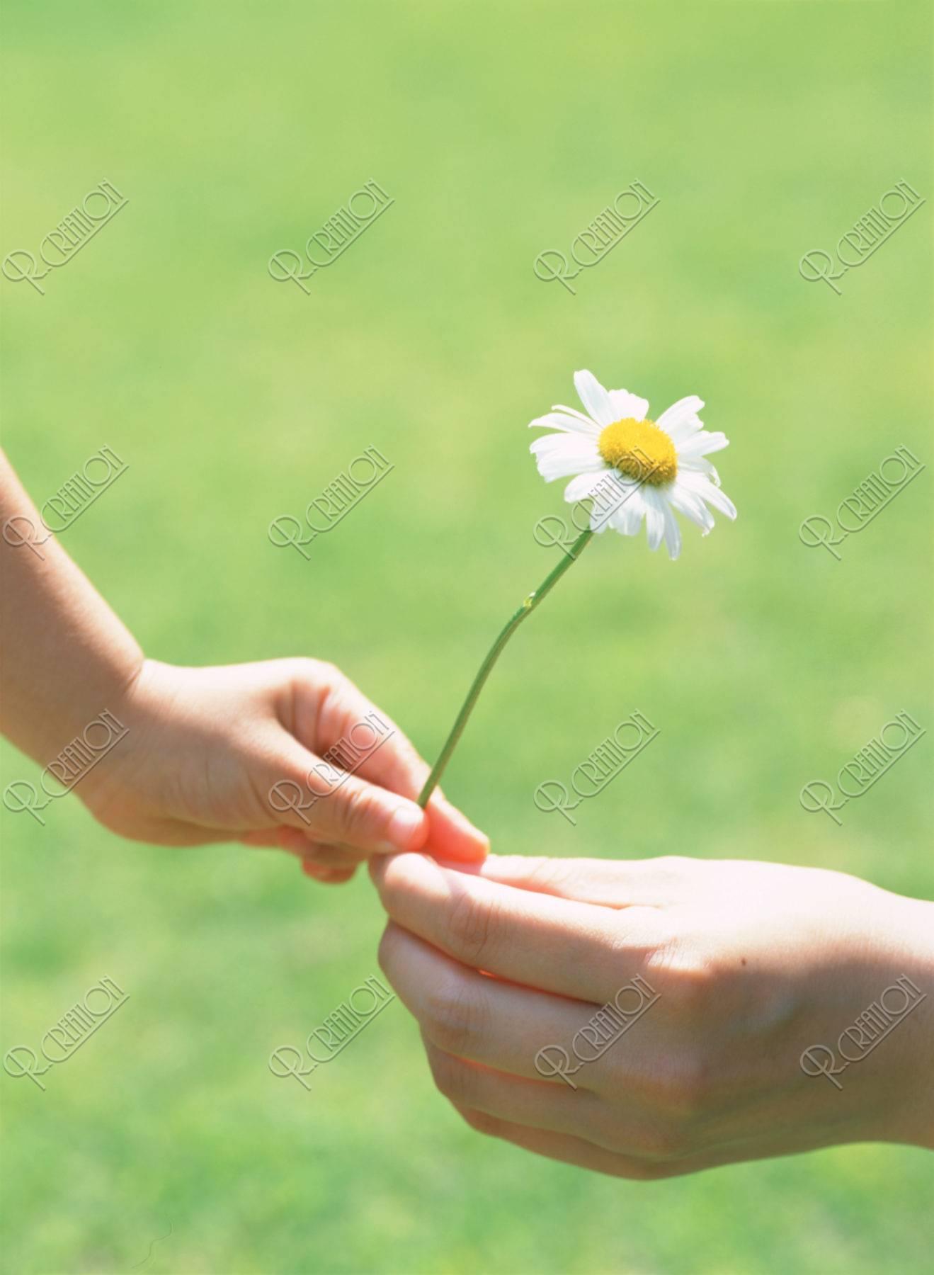 白い花を持つ母と子の手