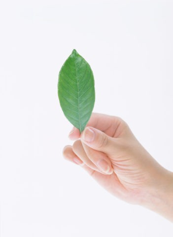 葉を持つ手