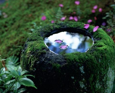 つくばいと山茶花の花びら