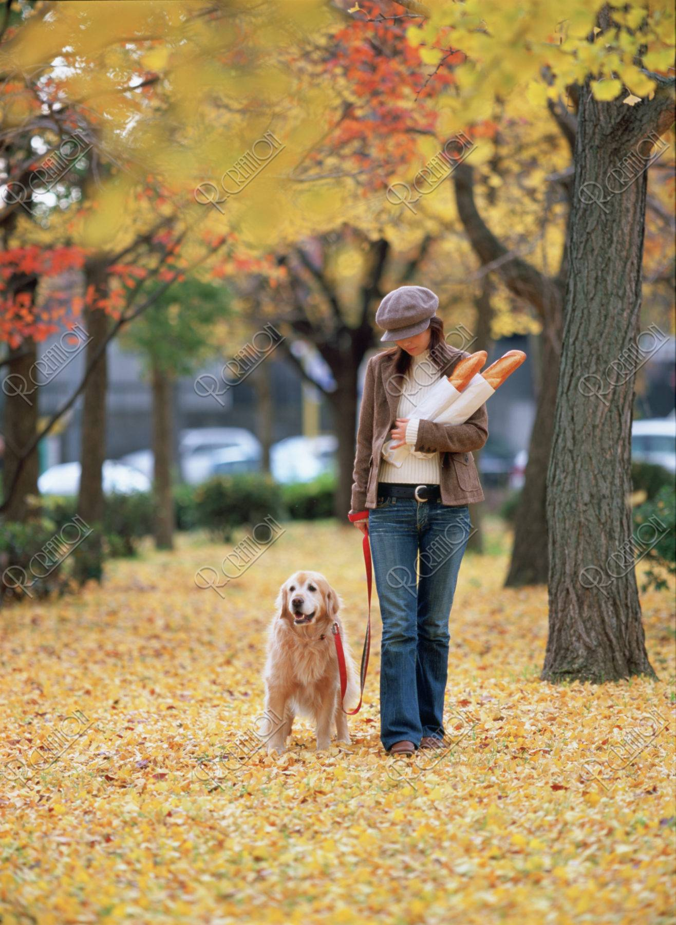 銀杏の中を歩く女性と犬