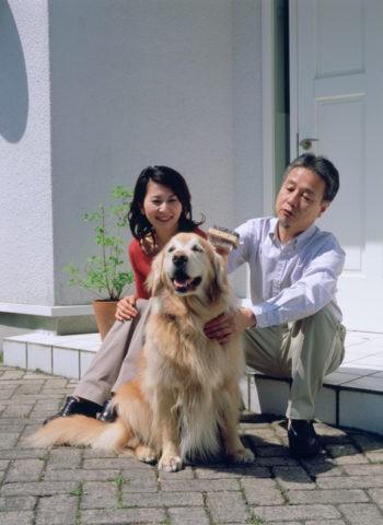 犬のブラッシングをする熟年夫婦