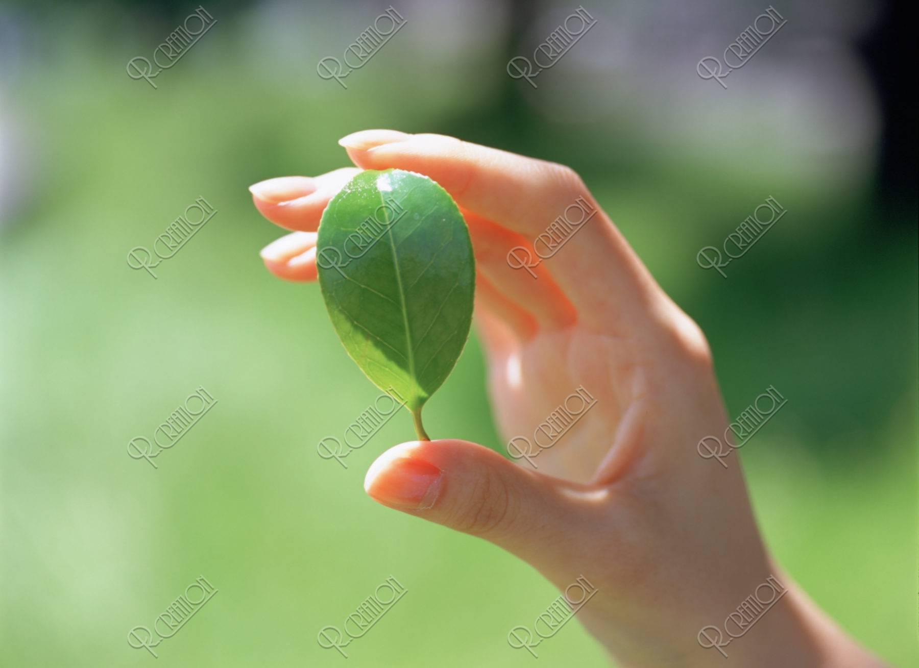 葉を持つ女性の手