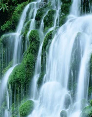 苔と流れ 元滝