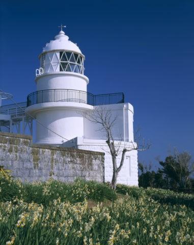 水仙と樫野崎灯台