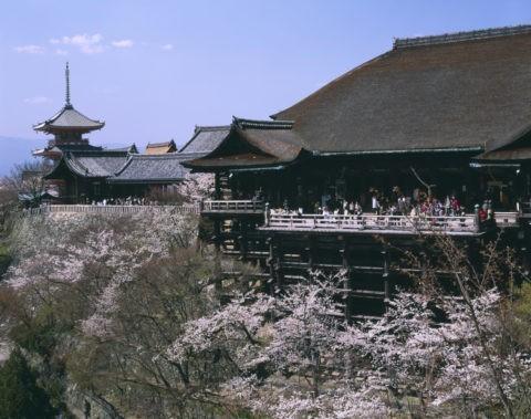 清水寺 舞台と桜 世界遺産