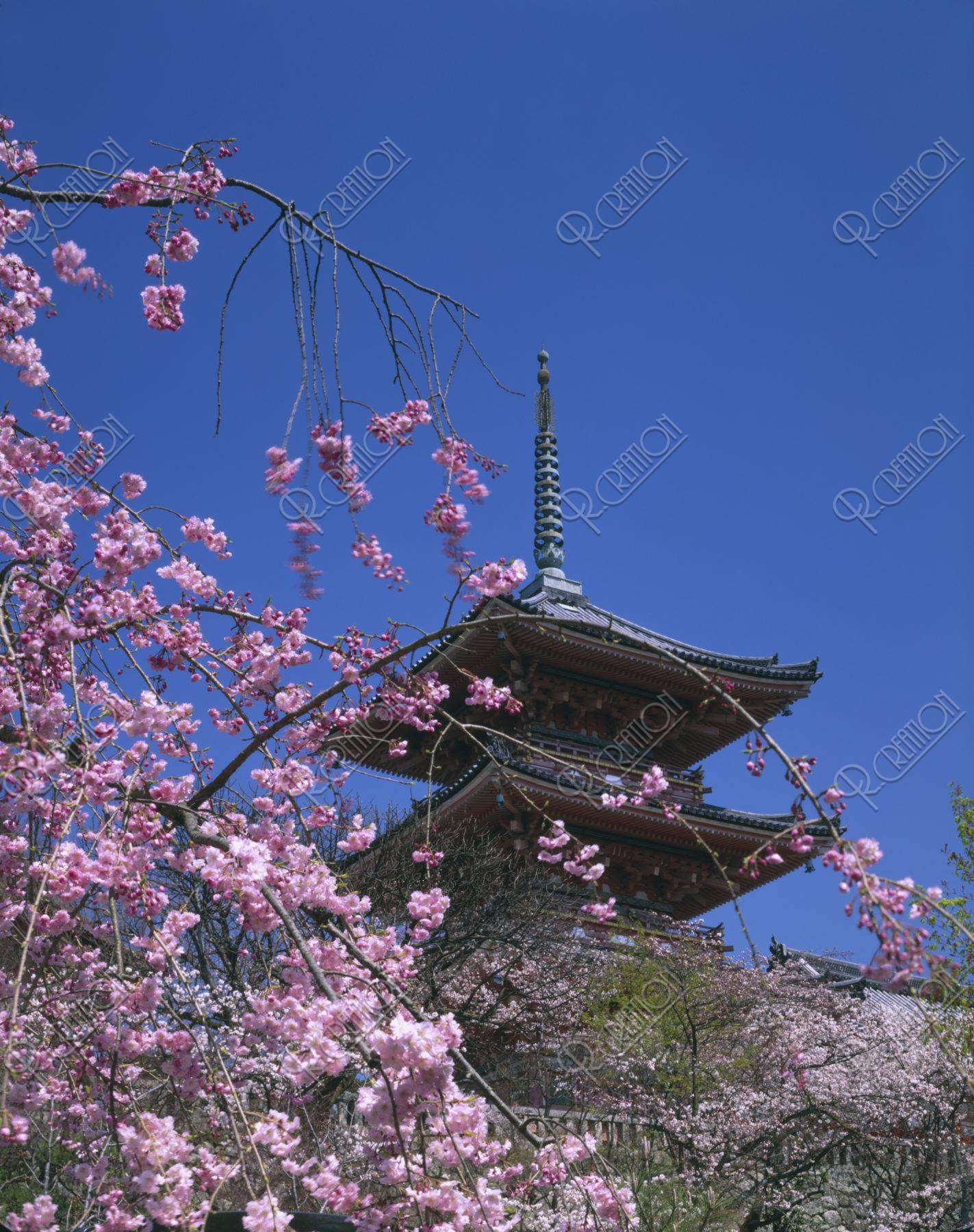 清水寺 三重塔と桜 世界遺産