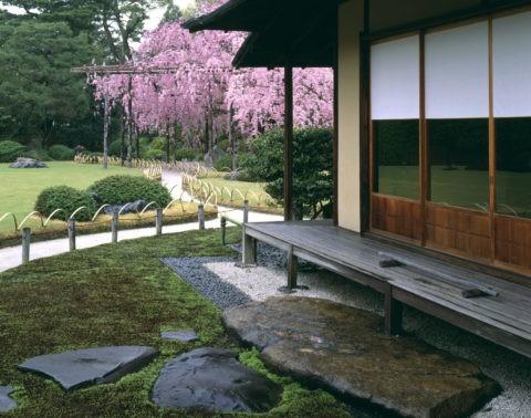 楽水苑の桜