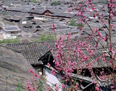 麗江の町並みと桃花 世界遺産