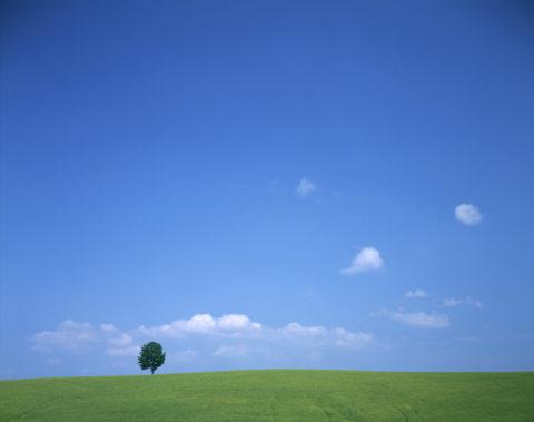 草原と樹 北海道 01-032