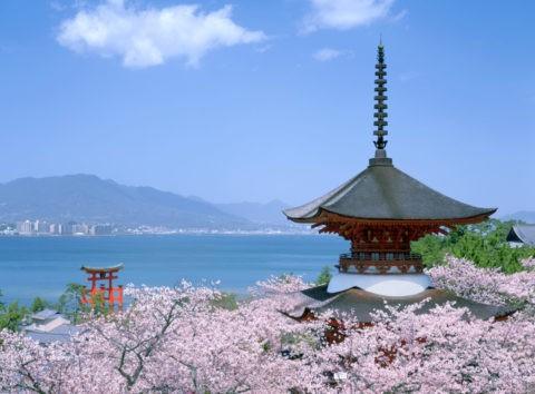 桜の厳島神社 多宝塔と大鳥居/世界遺産