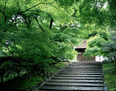 新緑の安楽寺参道