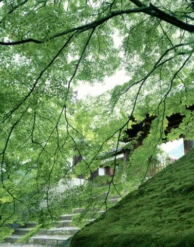 曼殊院山門と青楓