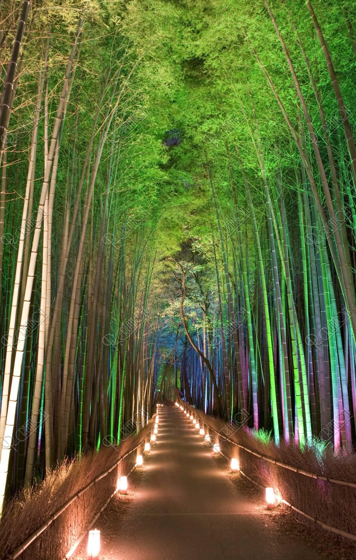 竹林の道と花灯路 嵯峨野 12月