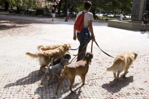 イヌの散歩屋