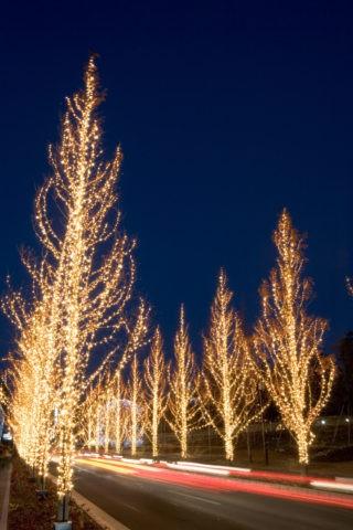 ローム クリスマスイルミネーション