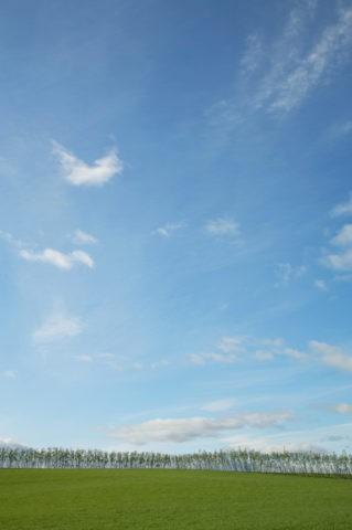 丘の上の並木と空