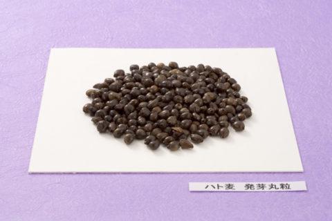 ハト麦 発芽丸粒