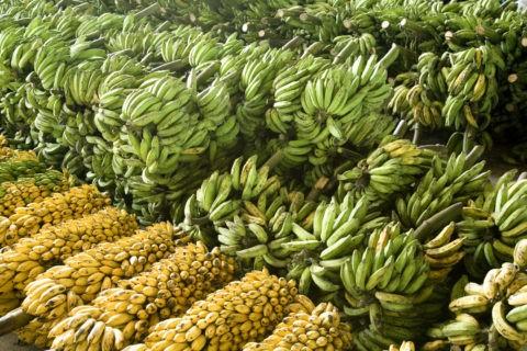 マナウス市場 バナナ一房¥100.−