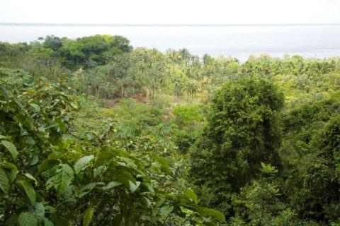 アマゾン川と密林