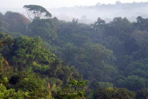朝のアマゾン密林