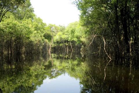 アマゾンの水中林